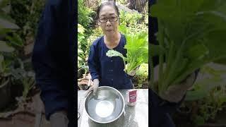 วิธีล้างผักให้สะอาด ลดสารเคมีที่ตกค้างในผัก