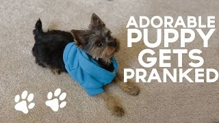 Adorable Puppy Gets PRANKED!!