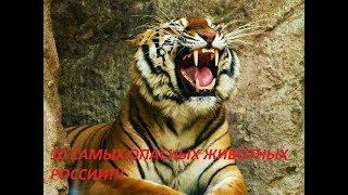 10 самых опасных животных России!