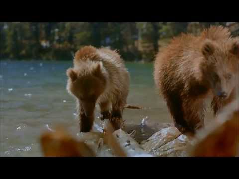 IMAX-Doku-Bears-German