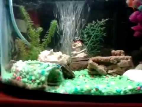 Acuario de agua dulce con los peces mas lindos youtube for Peces agua dulce tropicales para acuario