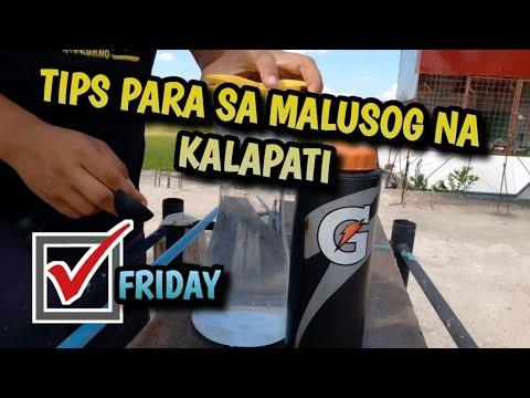 friday-tips-|-panatilihin-malusog-ang-mga-alagang-kalapati-|-the-loft-below