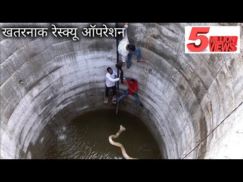 Today Dangerous Indian Cobra Rescue Operation From Ahmednagar District, India