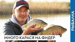 Отличная рыбалка на фидер Наловили весеннего КАРАСЯ