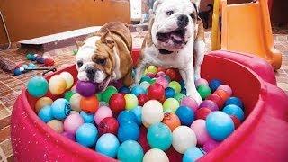 En México llevan una vida de perros... muy consentidos