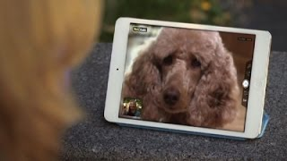 Pet Tech: Playing With Your Pets Remotely