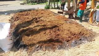 Cara pembuatan_pupuk Organik_dengan kotoran sapi!!