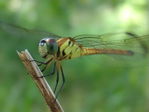 BBC One - Life, Insects  |Insecta Insects
