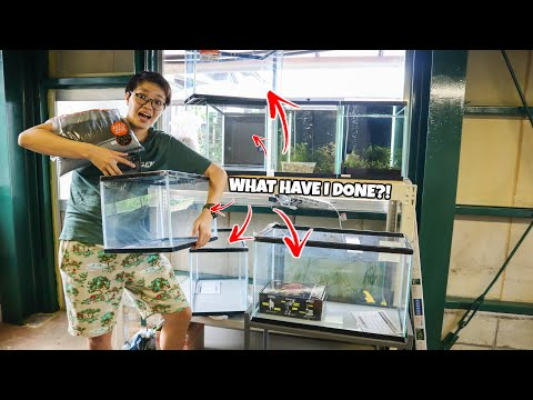 I Bought More FISH TANKS For The FISH ROOM!!
