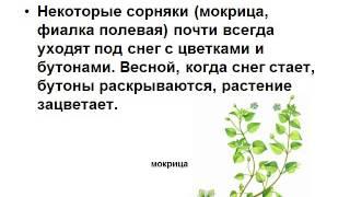 Презентация Тепло в жизни растений и животных