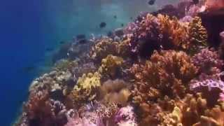 Instrumental Music And Calming Relaxing Underwater Life On Background