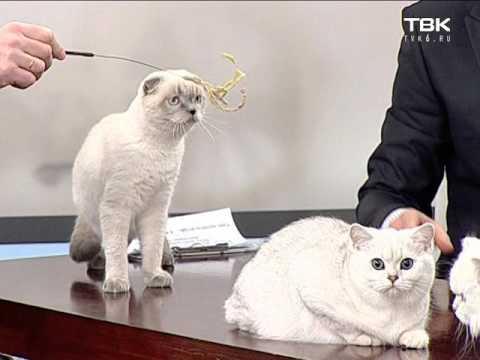 Заболевания суставов и костей у кошек