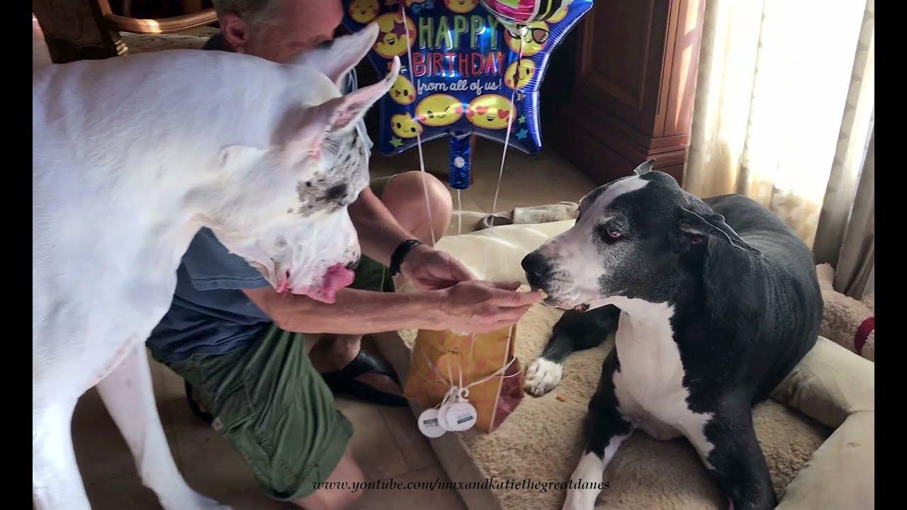 bilara dane Rule 34 - 3d canine canis3 cum female feral forced great ...