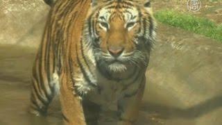 Мексика: куда теперь пристроят тысячи цирковых животных? (новости)