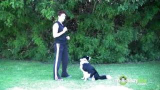 Dog Agility - Training Your Dog A Release Word
