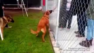 Собака из приюта узнала своих владельцев, но те пришли взять себе другого питомца