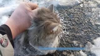 Операция по спасению котика