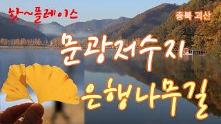 문광저수지 은행나무길[4K] - 국내추천 여행지/충북괴…