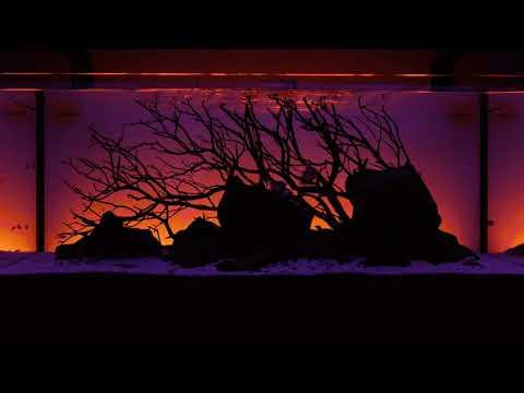 New Serene Freshwater Aquarium LED Light Kit with Background Lighting and Audio