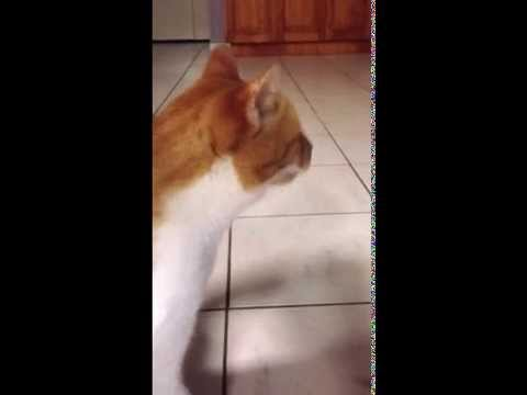 Hiccups Cats Youtube