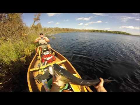 Moose Lake Musky and Northern