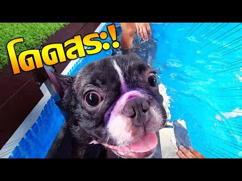 มอคค่า&เซิร์กผจญภัย! ว่ายน้ำครั้งแรกจ้าาาา!