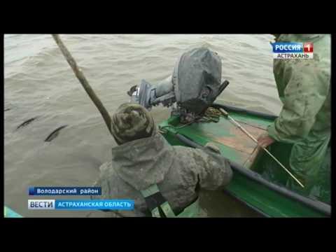 В Астраханской области началась весенняя путина. Лов стартовал в Володарском районе