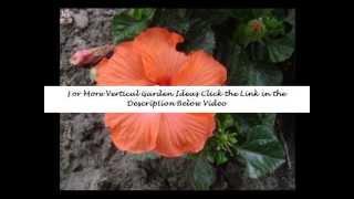Vertical Garden Planters | Vertical Gardening | Diy Vertical Gardening | Ideas | How To
