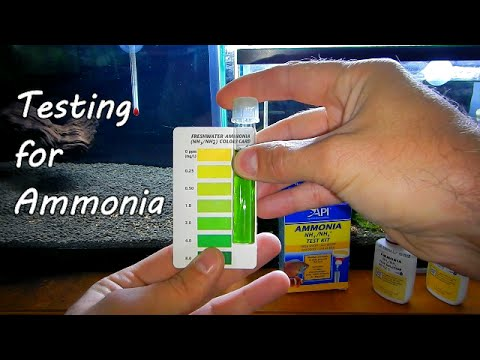 Testing Water For Ammonia