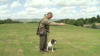 Teaching A Gundog Steadiness