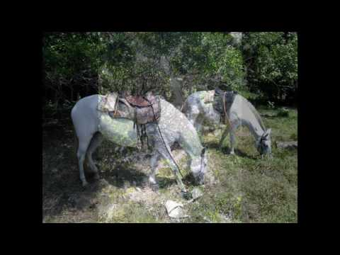 Discovery Horse Tours, Costa Rica