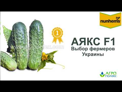 Огурец Аякс - ваша гарантированная прибыль | агрополекс | огурцов | семена | огурцы | огурец | лучшие | купить | сорта | аякс | ф1