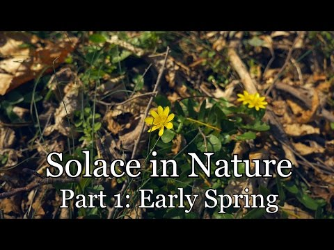 Solace In Nature Part 1: Early Spring (Woodland Ambience, Bird Sounds)