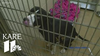 'Clear the Shelter' event happening tomorrow at Minneapolis Animal Care and Control