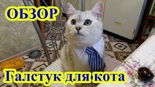Галстук для кота с Алиэкспресс