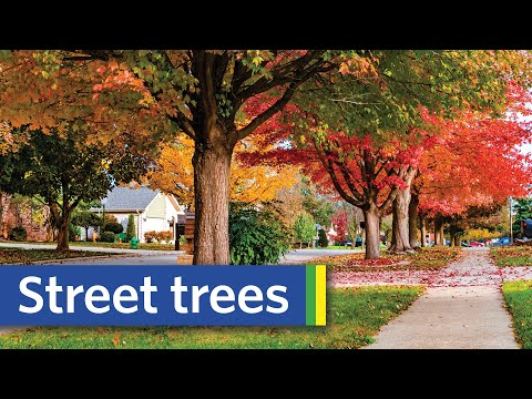 An Ode to Street Trees