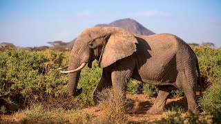 Protecting Africa's elephants: Discover Samburu with Save the Elephants & Google Maps Free HD Video
