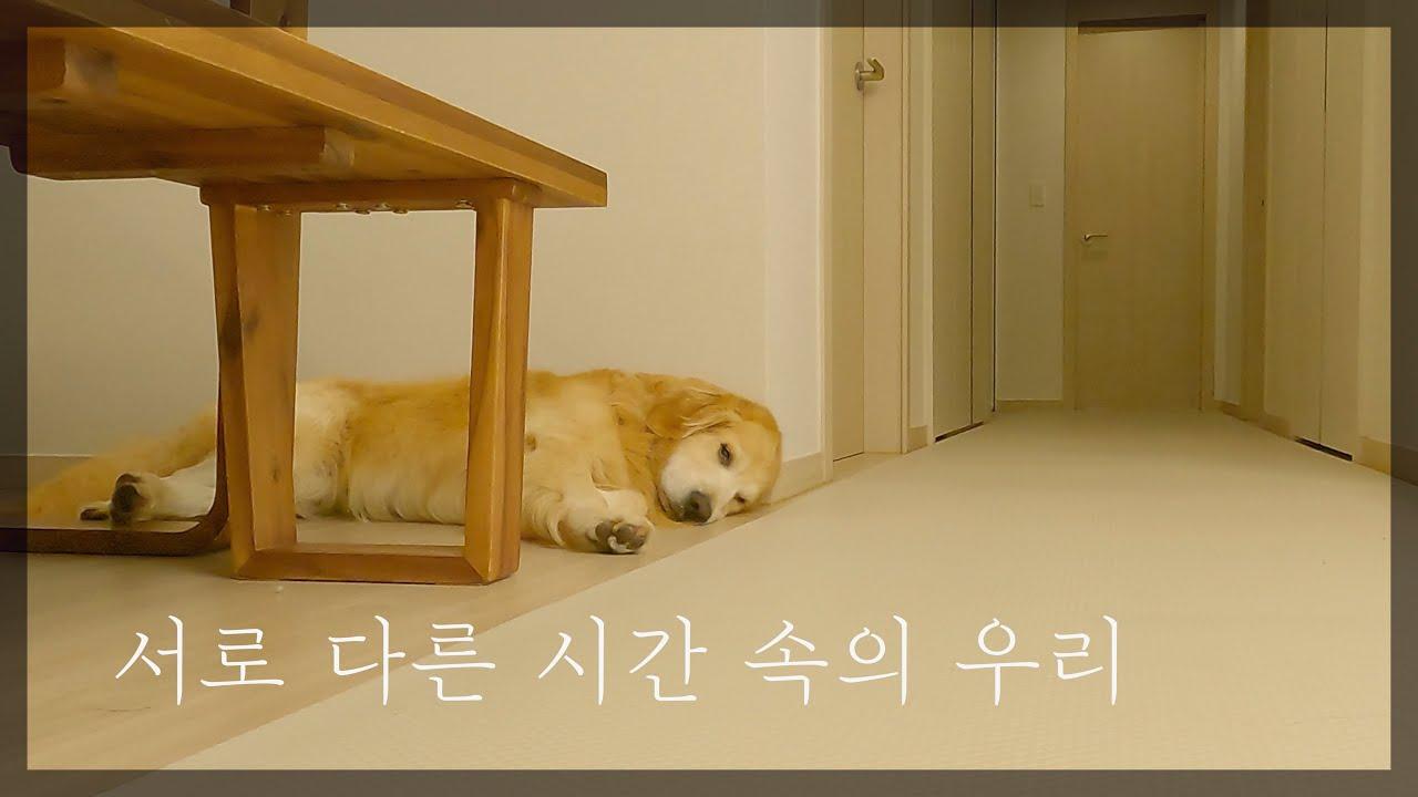 혼자 남겨진 강아지의 1시간이 7시간같은 이유 [Eng Sub]