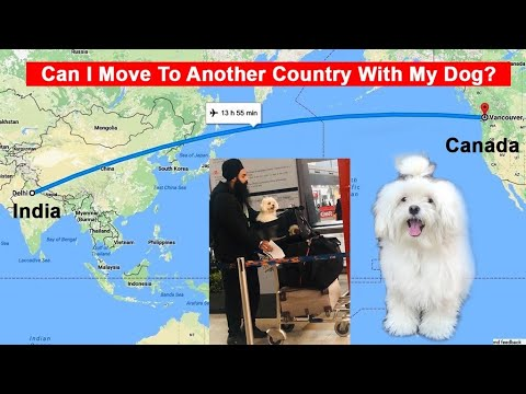 Can I Move To Another Country With My Dog?
