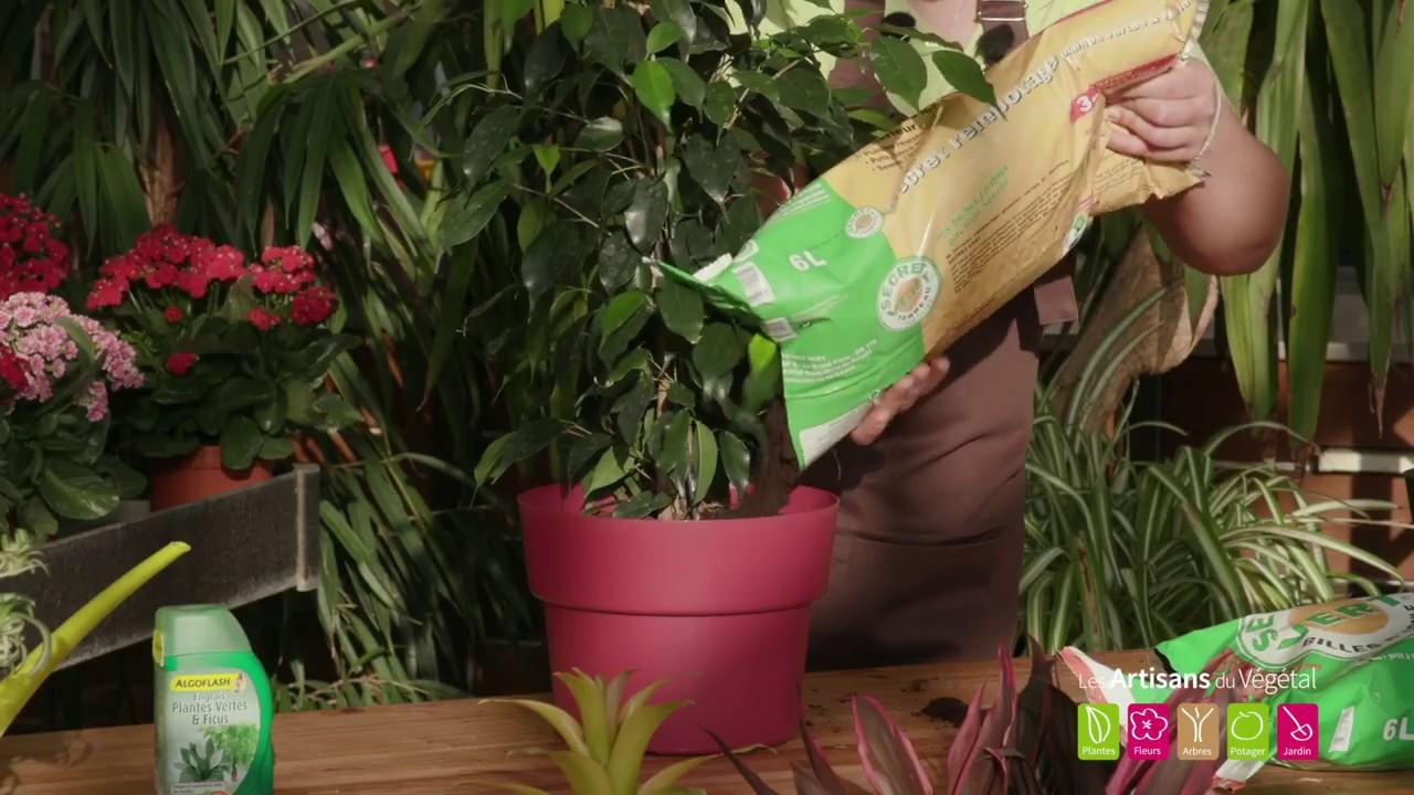 Arrosage Pour Plantes En Pot comment arroser et entretenir ses plantes vertes ?