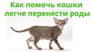 Как помочь кошке легче перенести роды. Ветеринарная клиника Био-Вет.