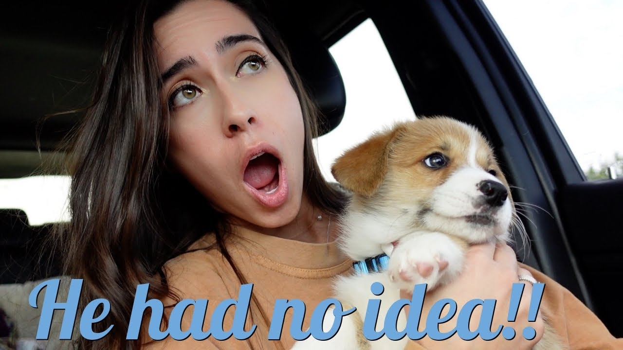 Surprising Him with a Puppy! *He Cried*