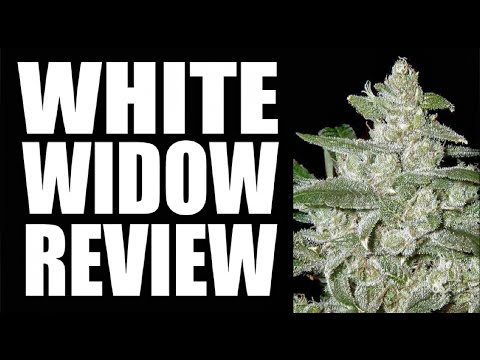 WHITE WIDOW | STRAIN REVIEW
