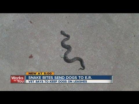 Snake Bites Send Dogs To Vet Office