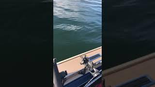 Fishing Perch