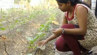 """""""crazy engineers: Experiments with automated drip irrigation system"""""""