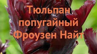 Тюльпан обыкновенный Фроузен Найт (tyulpan) ???? обзор: как сажать, луковицы тюльпаны Фроузен Найт