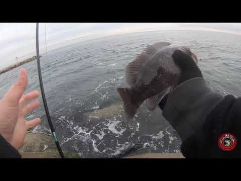 Tautog Fishing At The Manasquan Inlet