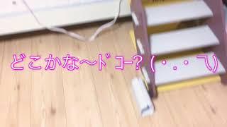 ココたんの可愛い冬眠を動画で撮ってみました〜´ ³`°) ♬  *.:*とても、...
