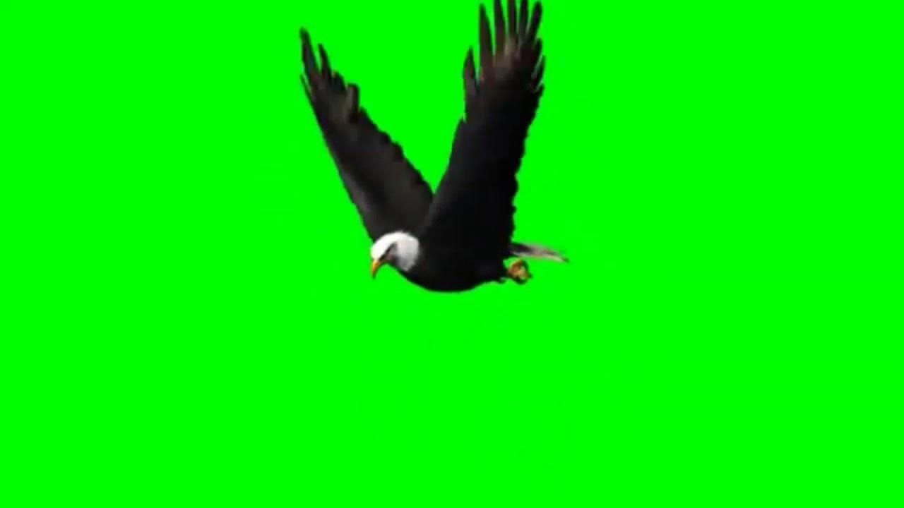 Green Screen Elang Youtube